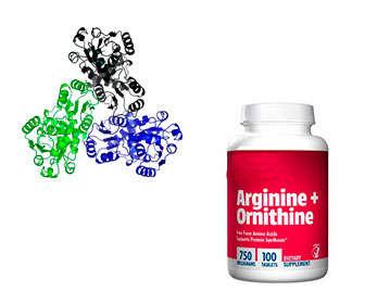 l-ornitina y l-arginina