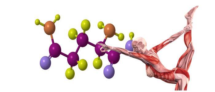 Función de lisina como aminoácido en el cuerpo humano