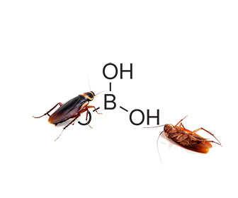 matar cucarachas con acido borico