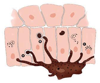 Cómo se forma la melanina en la piel, proceso y síntesis