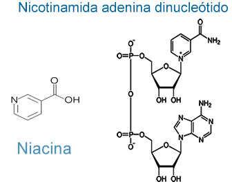 niacina y nadh estructura quimica