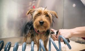 peluquerias caninas hialuronico perros