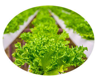 peróxido de hidrógeno en agricultura