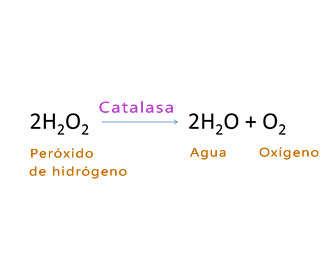 Reacción del peróxido de hidrógeno con catalasa