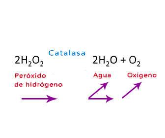 peroxido hidrogeno estructura quimica y degradacion