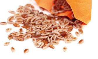 Las propiedades de plantago ovata y sus contraindicaciones
