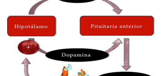 relación entre la hormona prolactina y dopamina