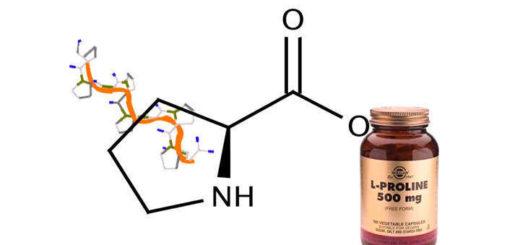 prolina aminoácido, qué es, función