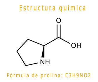 prolina estructura química y fórmula