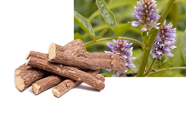 regaliz propiedades medicinales