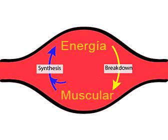 ribosa funcion
