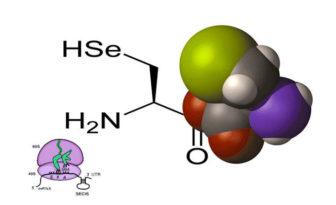 Función de selenocisteina y propiedades en los organismos