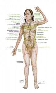 sistema linfatico femenino