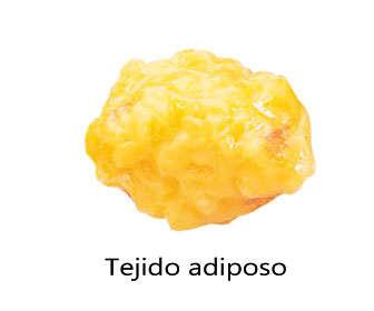 tejido adiposo o células grasas