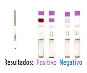 Resultados del test de la ovulación positivo y negativo