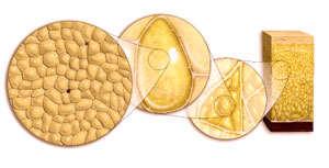 Dieta para bajar de peso proteinas picture 6