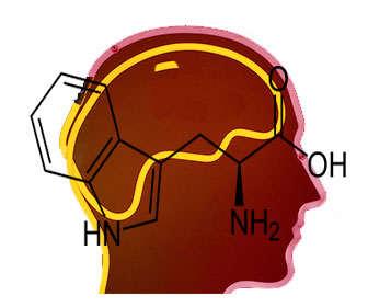 triptofano y vitamina b3