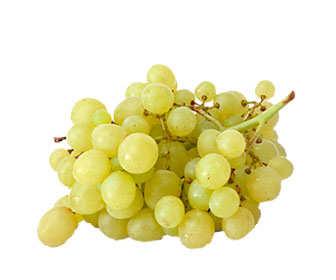 Variedades de uvas blancas