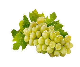 Uvas, fruta de la vid