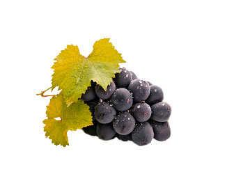 uvas negras recien cortadas
