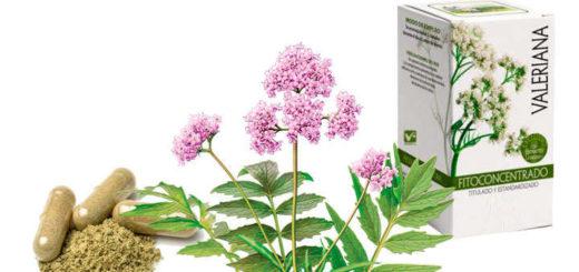 Propiedades y beneficios de valeriana officinalis
