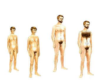 Edad en la que crece el vello púbico y como evoluciona su crecimiento
