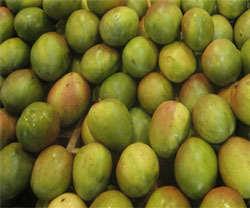 vitamina b mango fruta