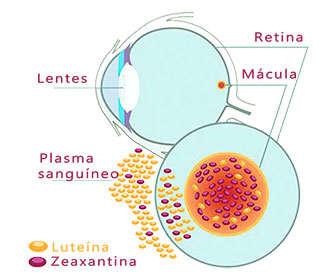 zeaxantina y luteina para la degeneracion macular